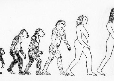 Evolutie van de vrouw